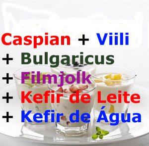 Comprar Caspian, Viili, Bulgaricus, Filmjolk, Kefir de Leite e Kefir de Agua.